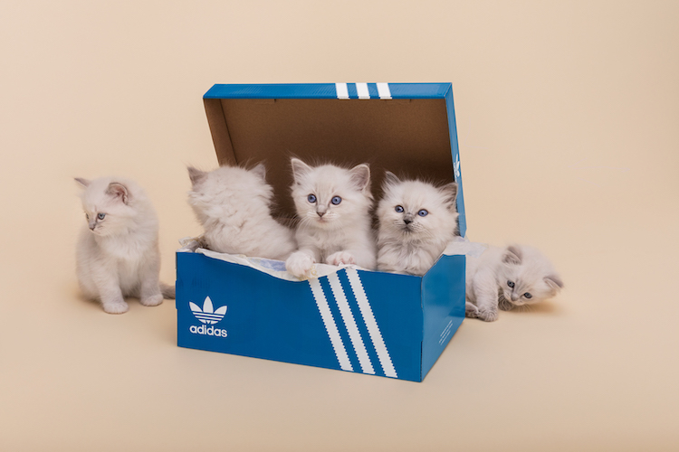 Sneakersnstuff x adidas Originals I-5923 Pack